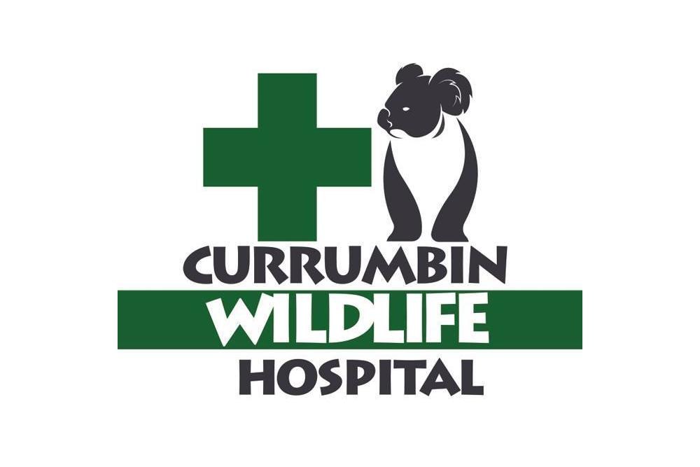 Currumbin-Wildlife-Hospital